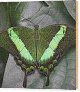 Emerald Swallowtail Buttefly Wood Print
