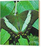 Emerald Swallowtail Butterfly Wood Print
