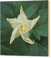 Emerging Angel Wood Print