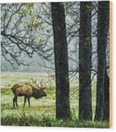 Emerging From The Fog Wood Print by Priscilla Burgers