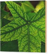Emerging Greens Wood Print