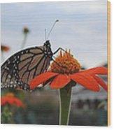 Emerging Monarch Wood Print