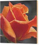 Emerging Red Rose Wood Print
