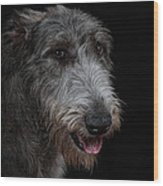 Irish Wolfhound II Wood Print