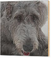 Irish Wolfhound IIi Wood Print