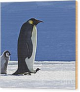 Emperor Penguin And Chick Wood Print