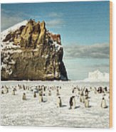Emperor Penguin Colony Cape Washington Antarctica Wood Print