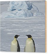 Emperor Penguins Wood Print