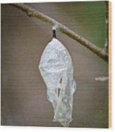 Empty Butterfly Chrysalis Wood Print