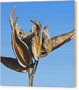 Empty Milkweed Pods Against Blue Sky Wood Print