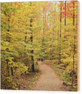 Empty Trail Runs Through Tall Trees Wood Print