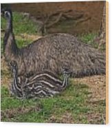 Emu And Chicks Wood Print