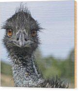 Emu Gaze Wood Print