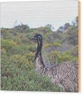 Emu Wood Print