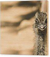 Emu Portrait Wood Print