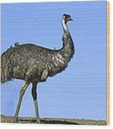 Emu Portrait Sturt National Park Wood Print