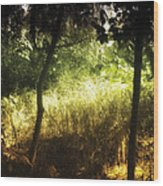 Enchanted Forest 1 Wood Print