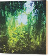 Enchanted Forest 12 Wood Print