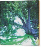 Enchanted Forest 15 Wood Print