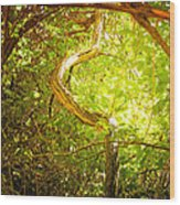 Enchanted Forest 4 Wood Print
