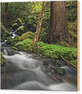 Enchanted Forest Wood Print by Pamela Winders