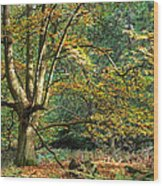 Enchanted Forest Tree Wood Print
