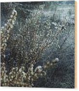 Enchanted Frost Wood Print
