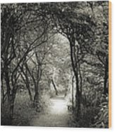 Enchanted Path Summer Wood Print