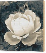 Enchanted Rose Wood Print