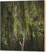 Enchanted Willow Wood Print