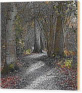 Enchanted Woods Wood Print by Linsey Williams