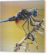 Enchanting Dragonfly Wood Print