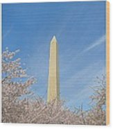 Enchanting Spring In Washington Wood Print