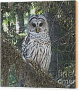 Encounter With An Owl Wood Print by Heike Ward