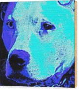 End Dog Fighting  Wood Print by Q's House of Art ArtandFinePhotography