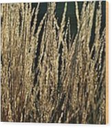 End Of Summer Grasses Wood Print