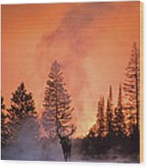 End Of The Day Wood Print