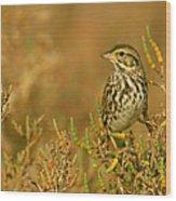 Endangered Beldings Savannah Sparrow - Huntington Beach California Wood Print