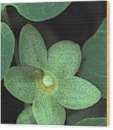 Endangered Flora Wood Print