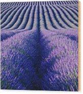 Endless Rows Wood Print