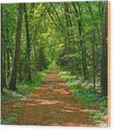 Endless Trail Into The Forest Wood Print