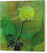 Enduring Yellow Rose Wood Print by Shirley Sirois