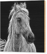 Energetic White Horse Wood Print
