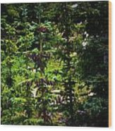 Englemann Spruce Colors Wood Print