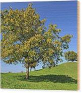 English Black Walnut Tree Switzerland Wood Print