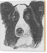 English Border Collie Wood Print by Catherine Roberts