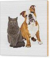 English Bulldog And Gray Cat Wood Print