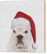 English Bulldog In Christmas Hat Wood Print