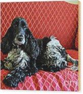 English Cocker Spaniel On Red Sofa Wood Print by Catherine Sherman