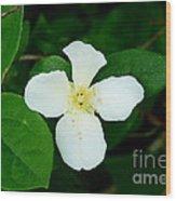 English Dogwood Blossom Wood Print